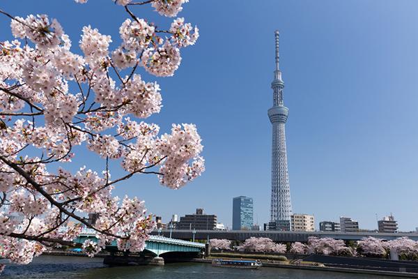 隅田川お花見コース