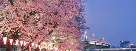 東京の夜景を屋形船で楽しむ